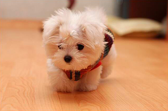最可爱的动物宝宝 q得没话说!(组图)