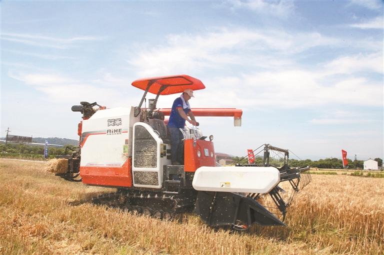 收割打捆一体机首收小麦